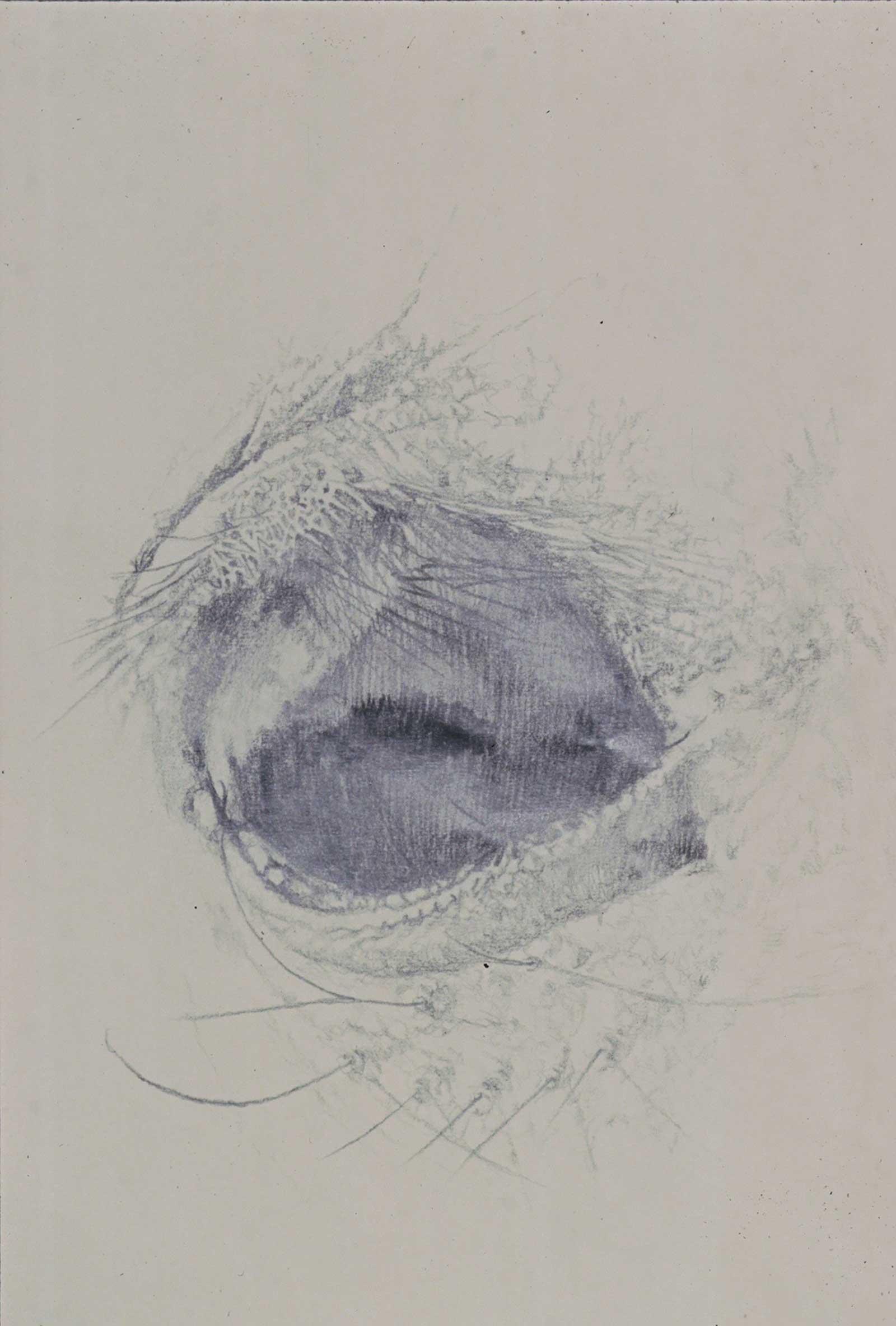drawings-47